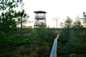 Estonian Bog and Sauna Tour