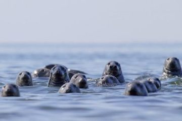 Seal watching. Nature tour in Estonia