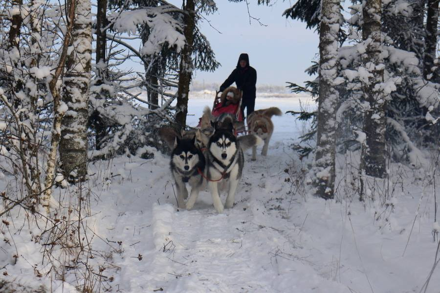 dog sled rides of winter park - 900×600