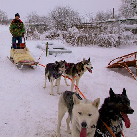 Husky Park and Dog-Sled Ride | Winter activities in ...