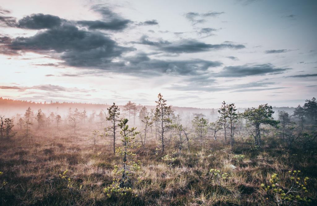 Bog Walk from Tallinn