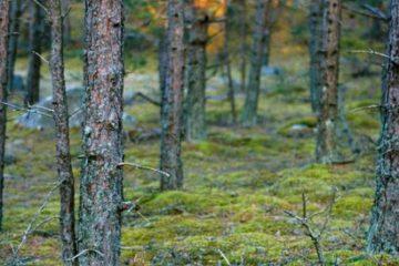 Hiking on Prangli island. Hot Estonian Sauna