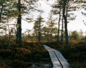 Walk in a bog