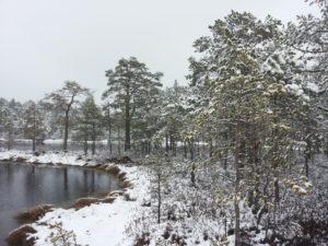 ©Roosild. Bog in wintertime