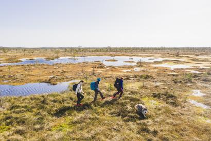 ©A. Teede. Bog-shoe hike in a bog