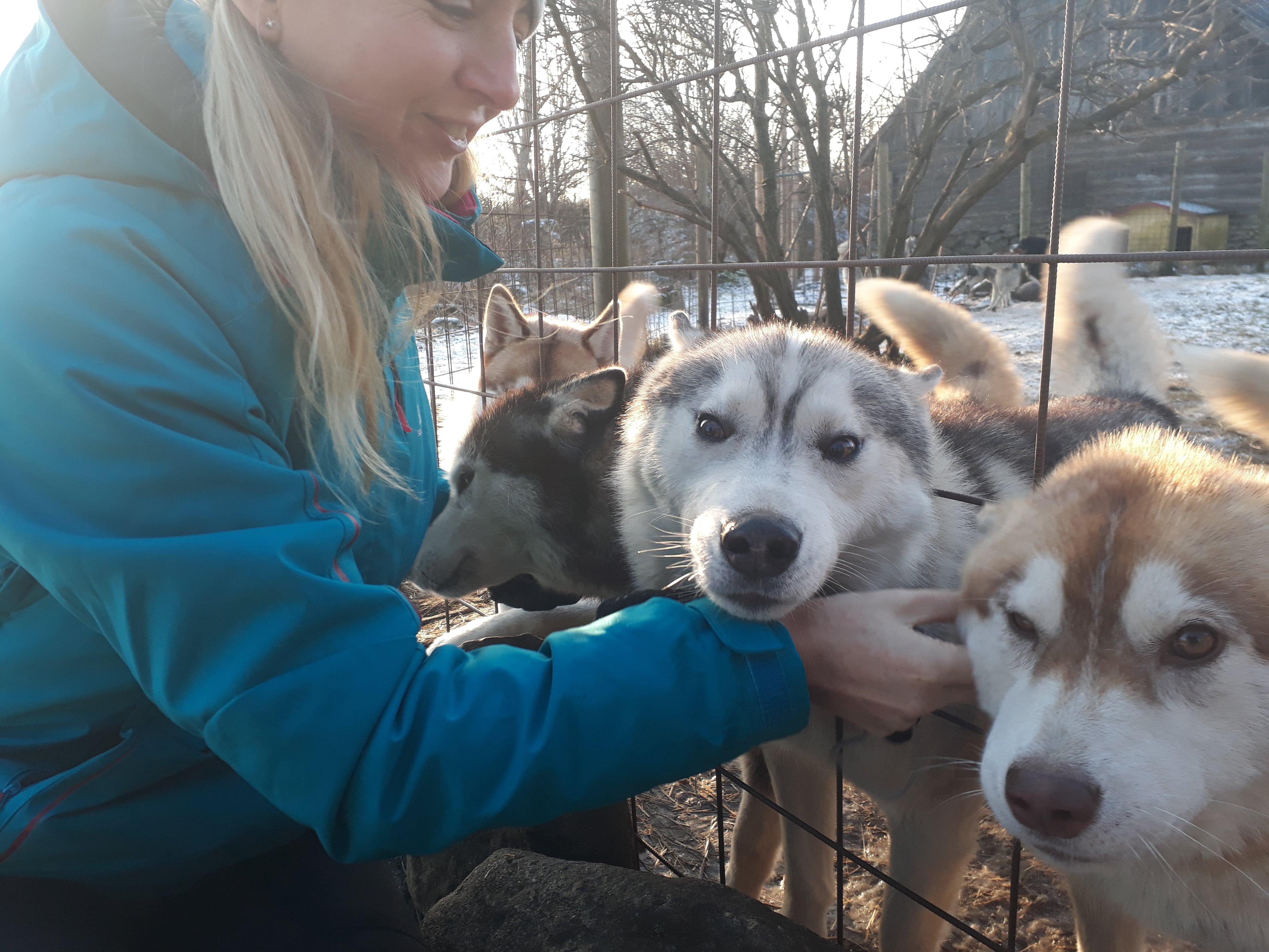 Helllooooo!!! Happy Huskies.