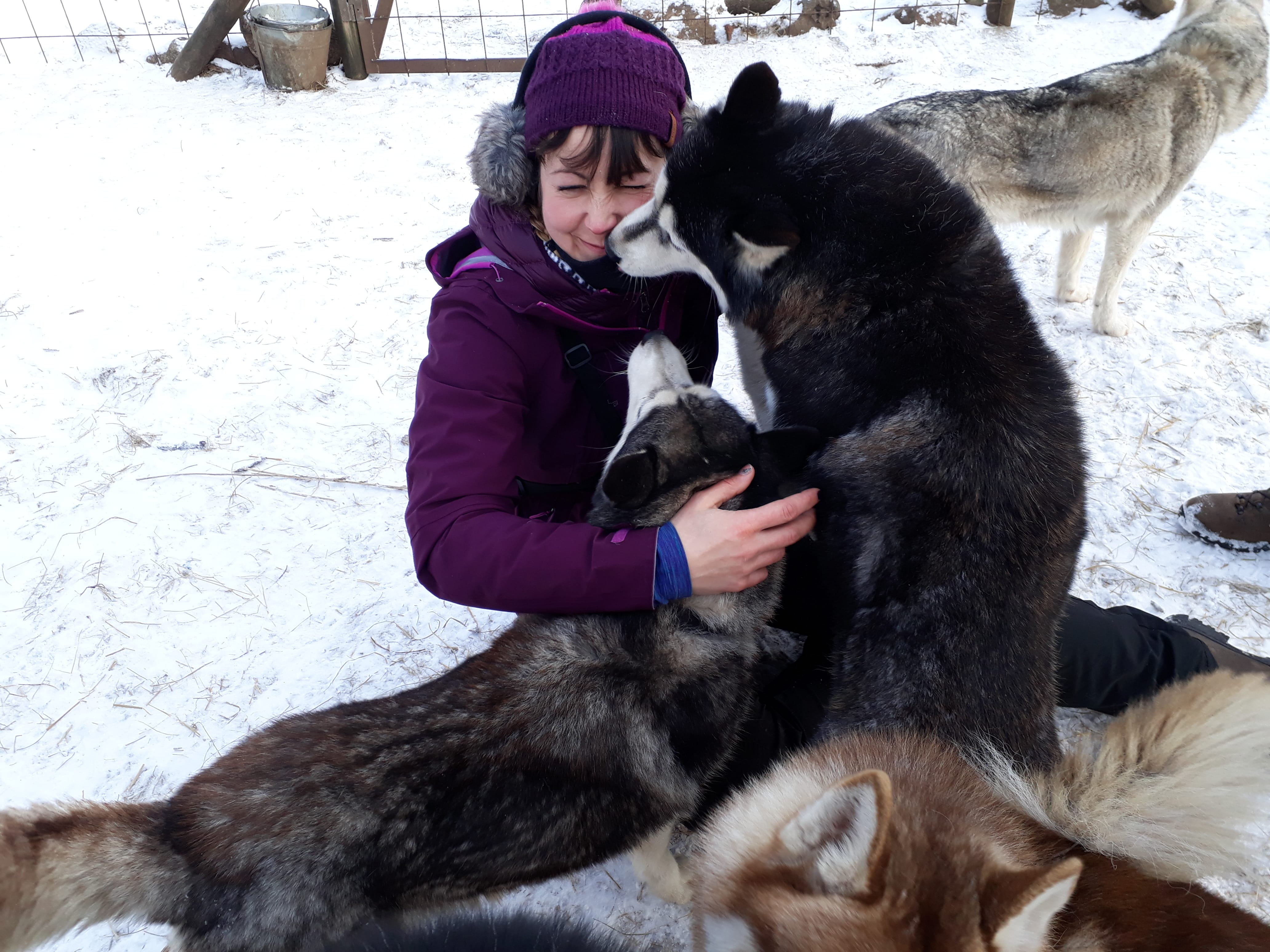 Huskies lick you you until you drop