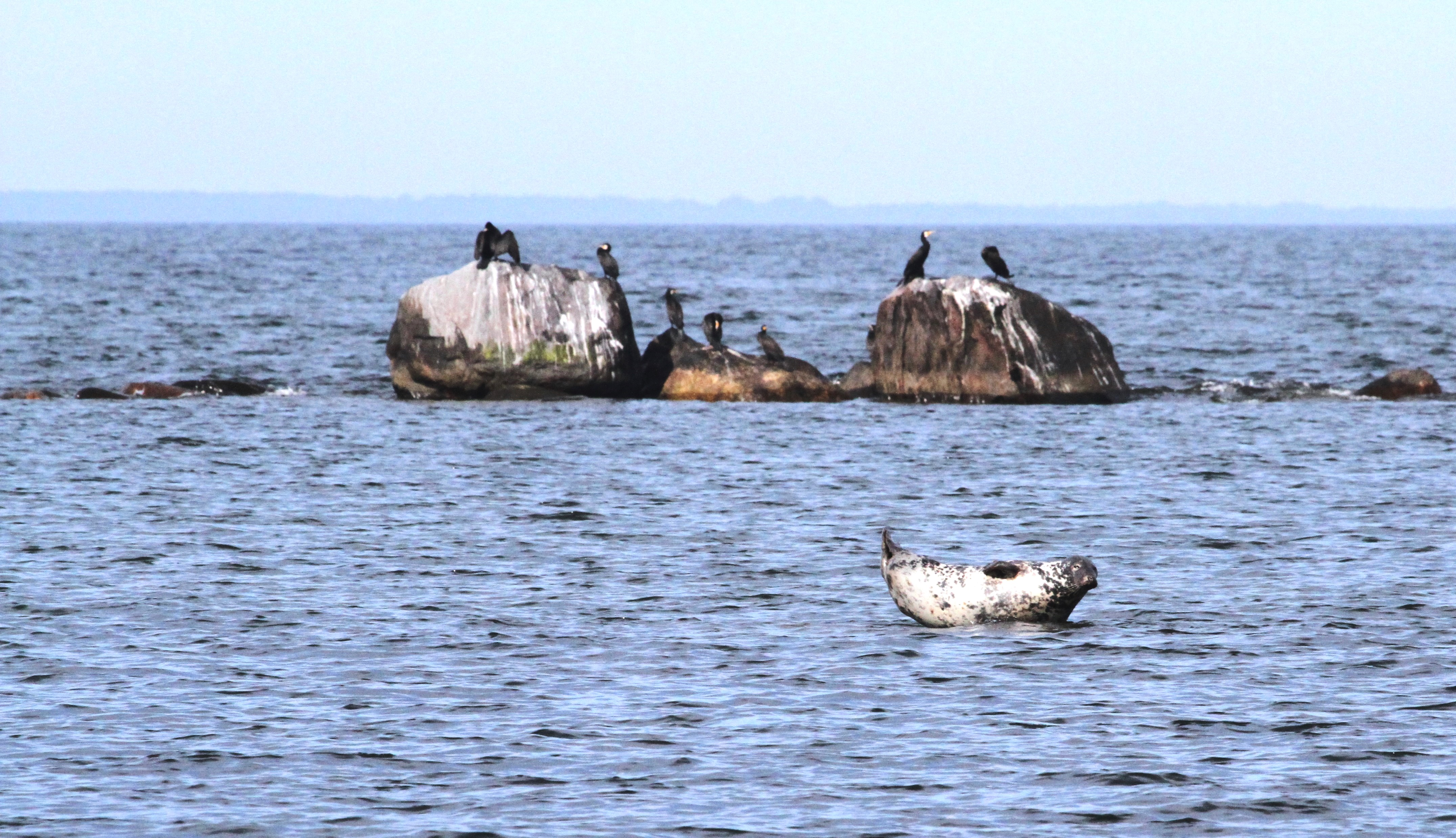 Tõnu Kauba. Diverse fauna near the Malusi islands where we go with our seal-watching trip.
