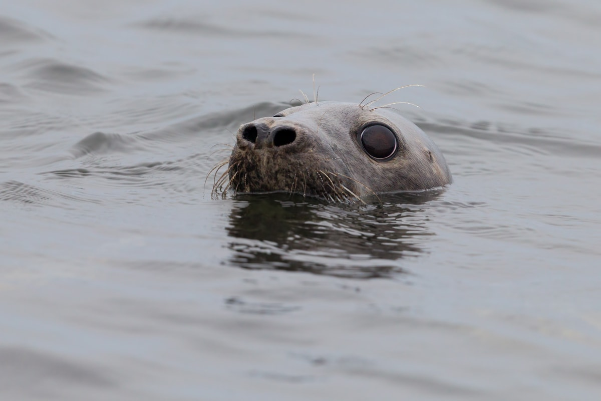Alar Saat. What are you trying, seal? We can still see you.
