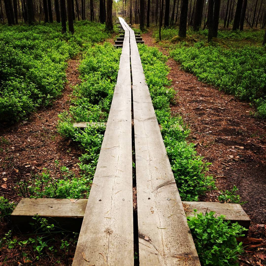 Well-maintained wooden trail leading to Viru bog