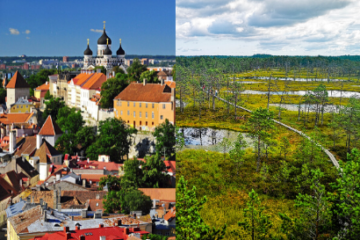 Alternative tours in Tallinn - Old Town and bog tour