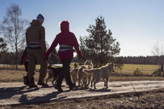 Visit to Husky Park from Tallinn | TallinnDayTrip