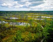 ©J. Leppmets - Visit Estonian bogs! Viru bog