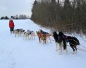 Talvised aktiviteedid lastele ja peredele, ettevõtetele